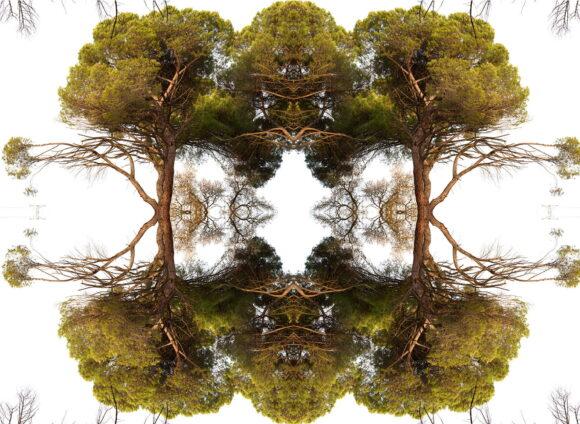 estructura or´ganica de pinos baja